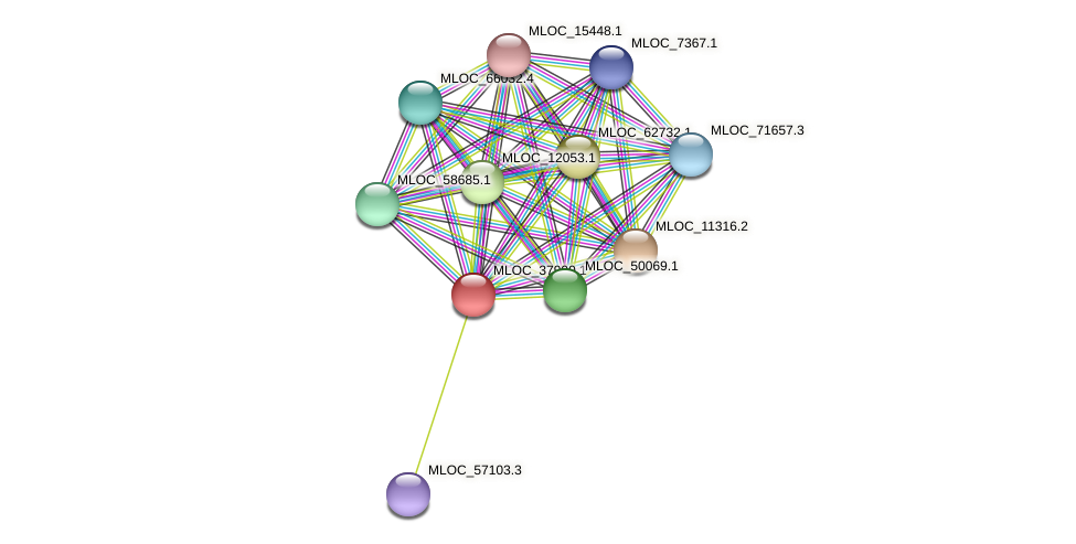 MLOC_37990.1 protein (Hordeum vulgare) - STRING interaction network