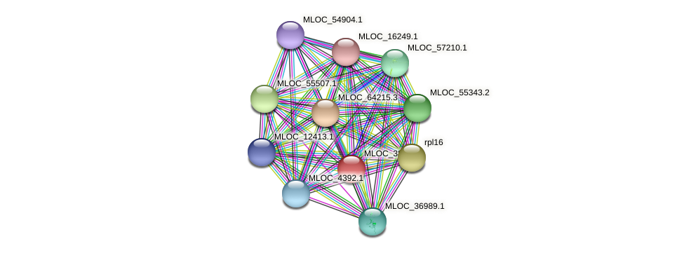MLOC_38048.1 protein (Hordeum vulgare) - STRING interaction network