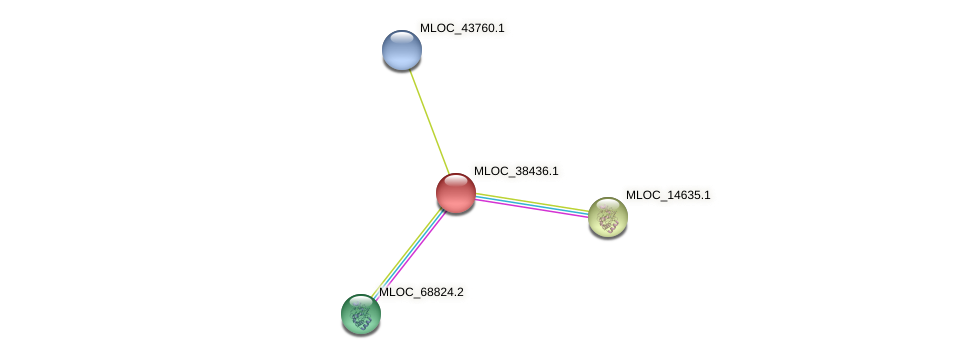 MLOC_38436.1 protein (Hordeum vulgare) - STRING interaction network