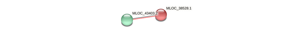 MLOC_38528.1 protein (Hordeum vulgare) - STRING interaction network