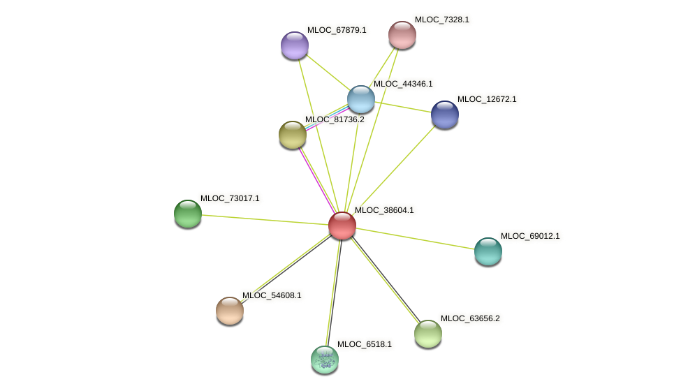 MLOC_38604.1 protein (Hordeum vulgare) - STRING interaction network