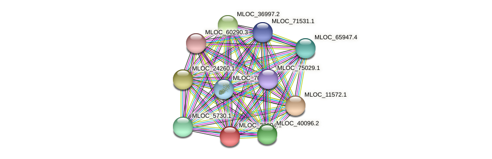 MLOC_38904.1 protein (Hordeum vulgare) - STRING interaction network