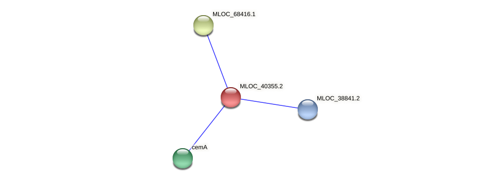 MLOC_40355.2 protein (Hordeum vulgare) - STRING interaction network