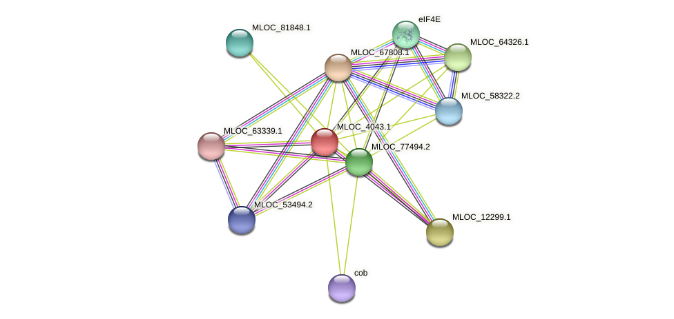MLOC_4043.1 protein (Hordeum vulgare) - STRING interaction network