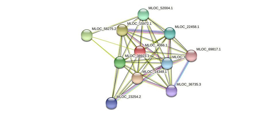 MLOC_4066.1 protein (Hordeum vulgare) - STRING interaction network
