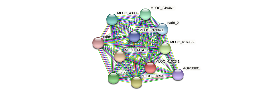 MLOC_41023.1 protein (Hordeum vulgare) - STRING interaction network