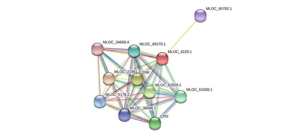 MLOC_4229.1 protein (Hordeum vulgare) - STRING interaction network