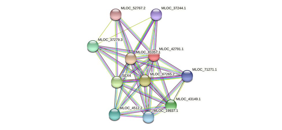 MLOC_42791.1 protein (Hordeum vulgare) - STRING interaction network