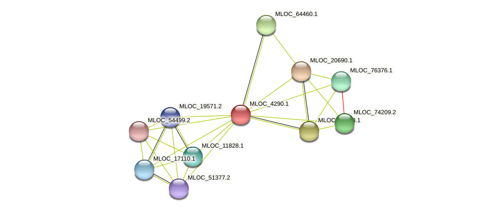 MLOC_4290.1 protein (Hordeum vulgare) - STRING interaction network