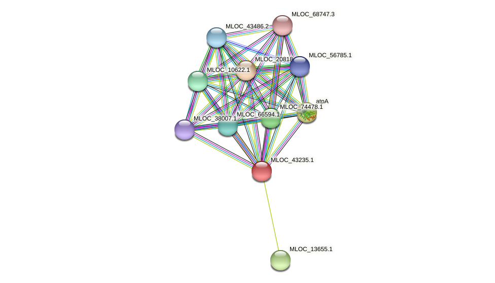 MLOC_43235.1 protein (Hordeum vulgare) - STRING interaction network