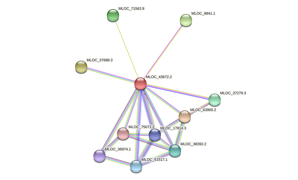 MLOC_43672.2 protein (Hordeum vulgare) - STRING interaction network