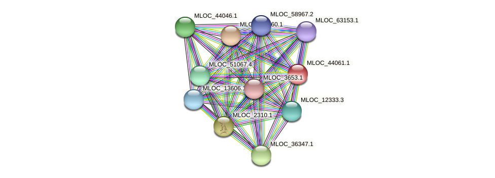 MLOC_44061.1 protein (Hordeum vulgare) - STRING interaction network