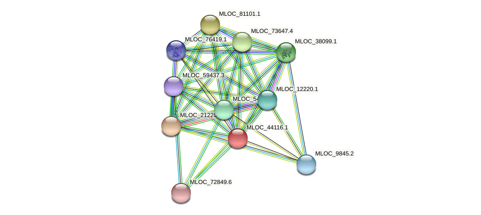 MLOC_44116.1 protein (Hordeum vulgare) - STRING interaction network