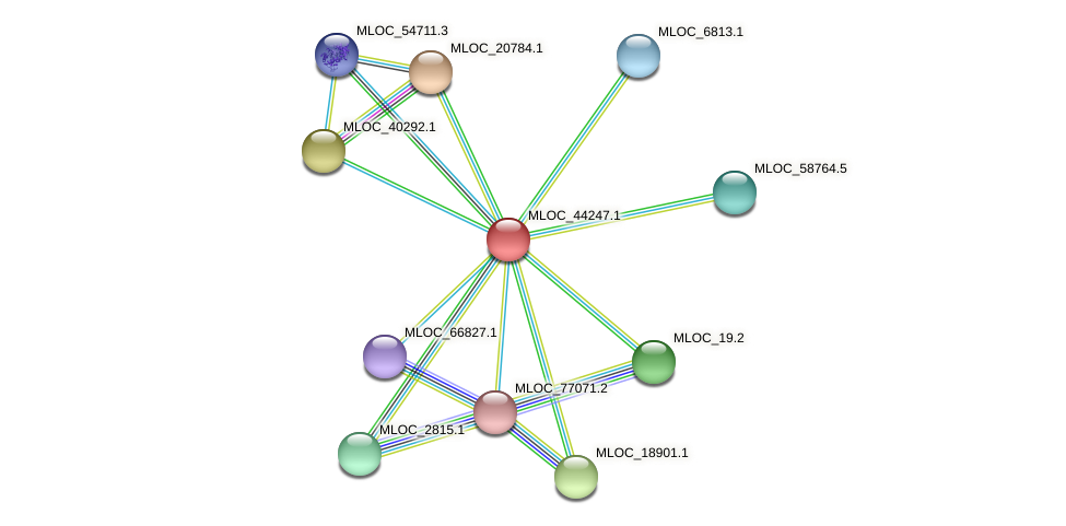 MLOC_44247.1 protein (Hordeum vulgare) - STRING interaction network