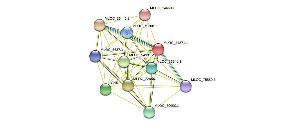 MLOC_44871.1 protein (Hordeum vulgare) - STRING interaction network