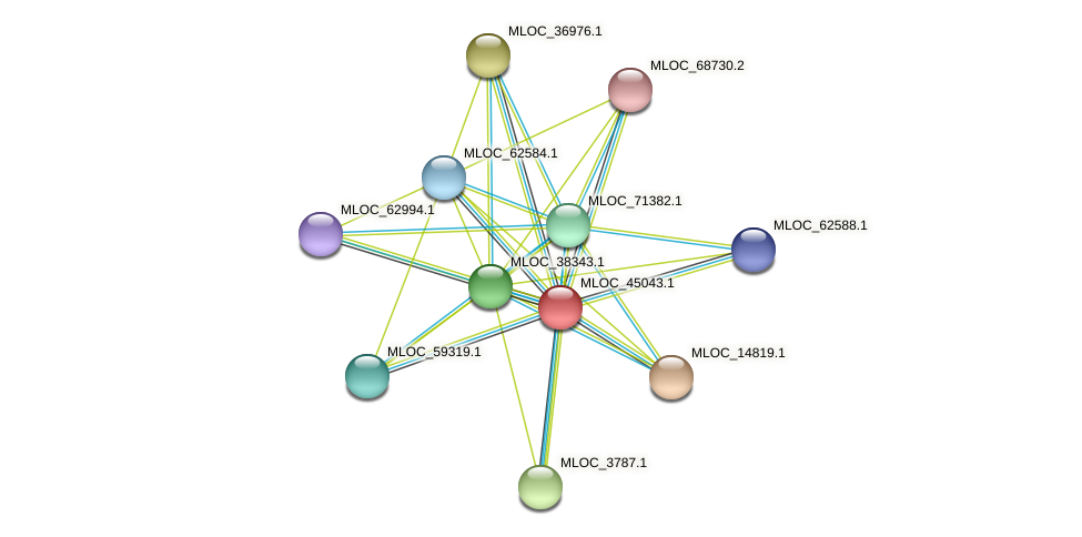 MLOC_45043.1 protein (Hordeum vulgare) - STRING interaction network