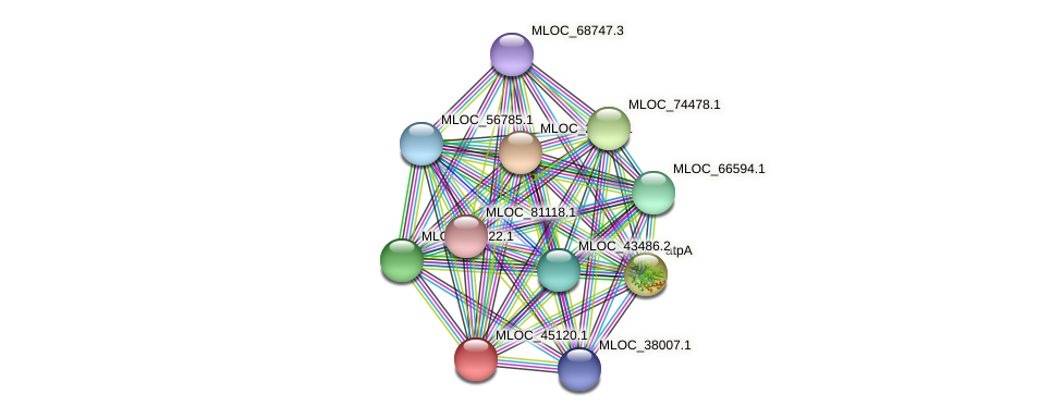 MLOC_45120.1 protein (Hordeum vulgare) - STRING interaction network