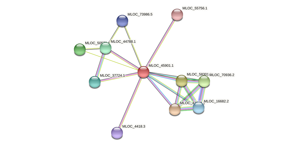 MLOC_45901.1 protein (Hordeum vulgare) - STRING interaction network