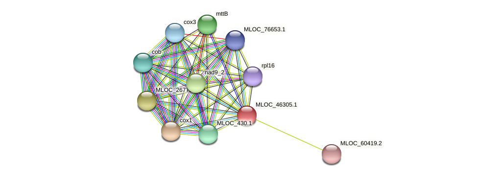 MLOC_46305.1 protein (Hordeum vulgare) - STRING interaction network