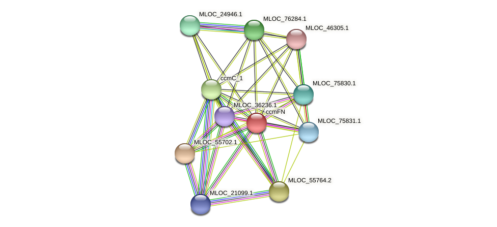 MLOC_464.1 protein (Hordeum vulgare) - STRING interaction network