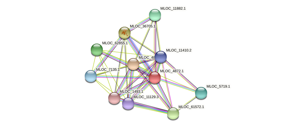 MLOC_4872.1 protein (Hordeum vulgare) - STRING interaction network