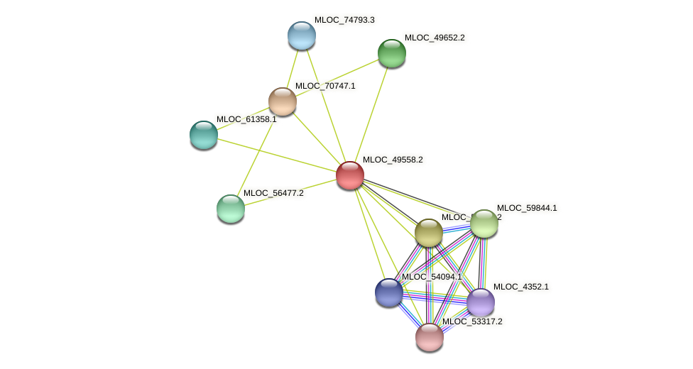 MLOC_49558.2 protein (Hordeum vulgare) - STRING interaction network