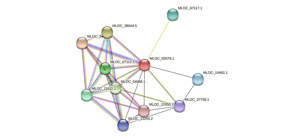 MLOC_50579.1 protein (Hordeum vulgare) - STRING interaction network
