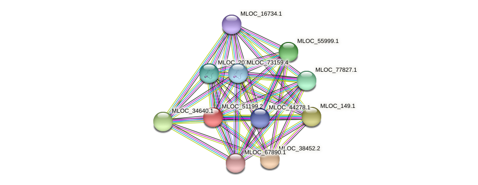 MLOC_51199.2 protein (Hordeum vulgare) - STRING interaction network