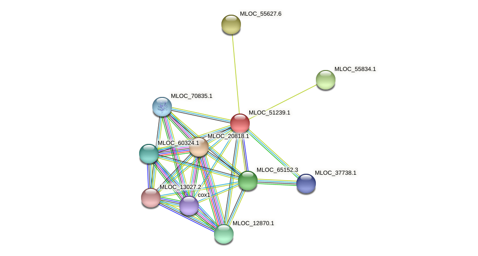 MLOC_51239.1 protein (Hordeum vulgare) - STRING interaction network
