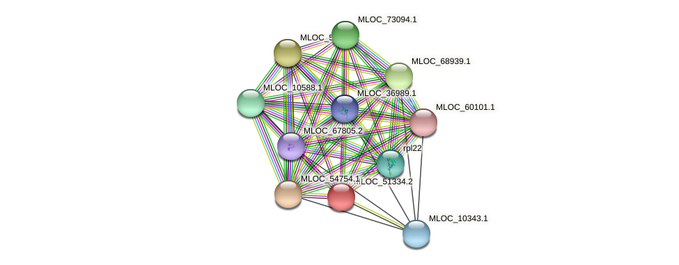MLOC_51334.2 protein (Hordeum vulgare) - STRING interaction network