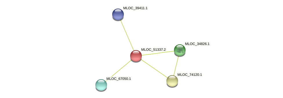 MLOC_51337.2 protein (Hordeum vulgare) - STRING interaction network