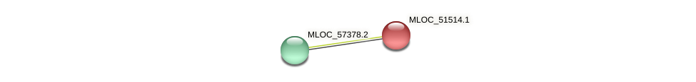 MLOC_51514.1 protein (Hordeum vulgare) - STRING interaction network
