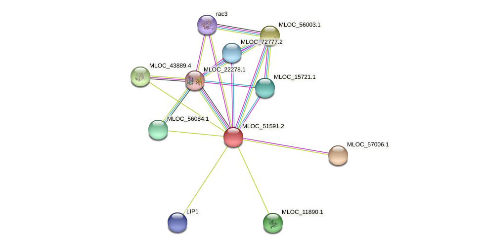 MLOC_51591.2 protein (Hordeum vulgare) - STRING interaction network