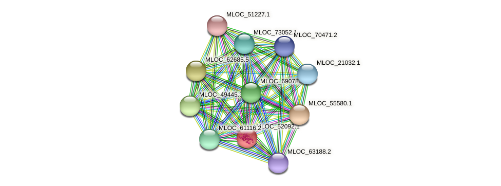 MLOC_52092.1 protein (Hordeum vulgare) - STRING interaction network