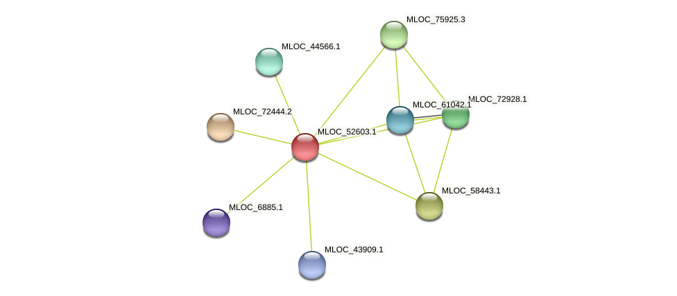MLOC_52603.1 protein (Hordeum vulgare) - STRING interaction network