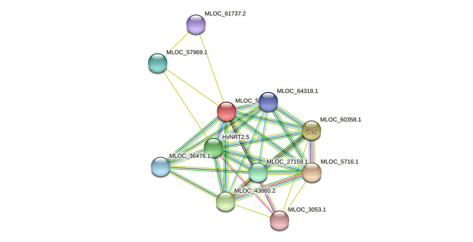MLOC_52621.1 protein (Hordeum vulgare) - STRING interaction network