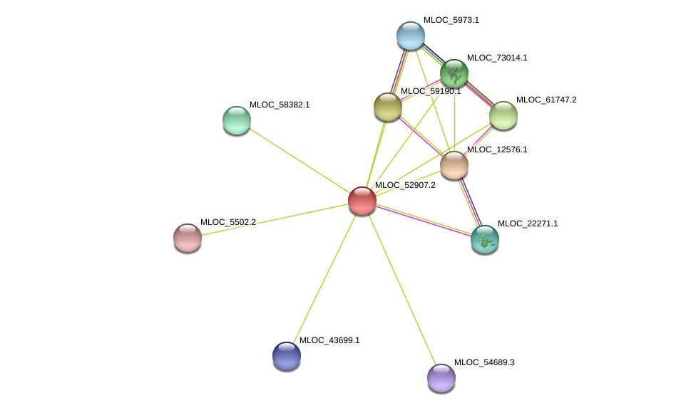 MLOC_52907.2 protein (Hordeum vulgare) - STRING interaction network