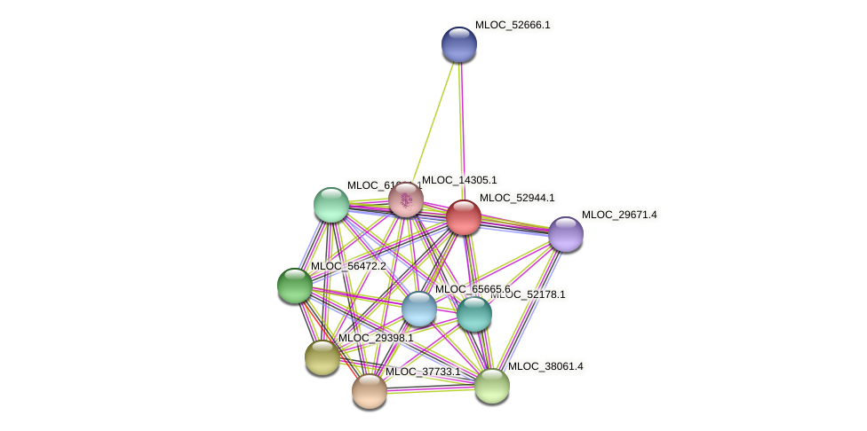 MLOC_52944.1 protein (Hordeum vulgare) - STRING interaction network