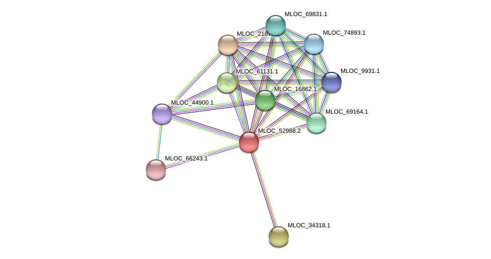 MLOC_52988.2 protein (Hordeum vulgare) - STRING interaction network