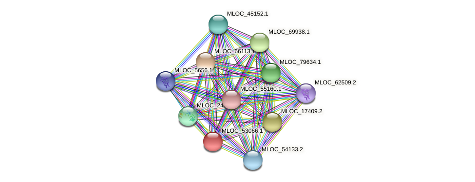 MLOC_53066.1 protein (Hordeum vulgare) - STRING interaction network