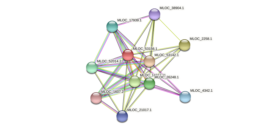 MLOC_53156.1 protein (Hordeum vulgare) - STRING interaction network