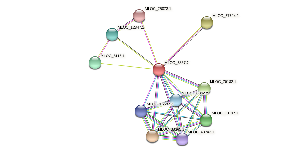 MLOC_5337.2 protein (Hordeum vulgare) - STRING interaction network