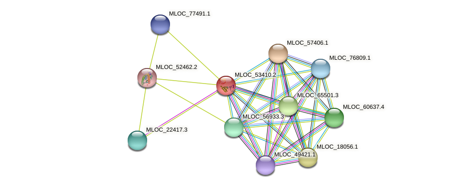 MLOC_53410.2 protein (Hordeum vulgare) - STRING interaction network