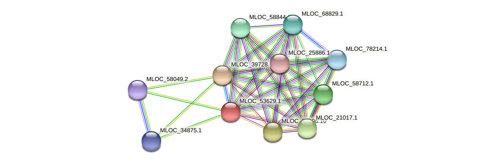 MLOC_53629.1 protein (Hordeum vulgare) - STRING interaction network