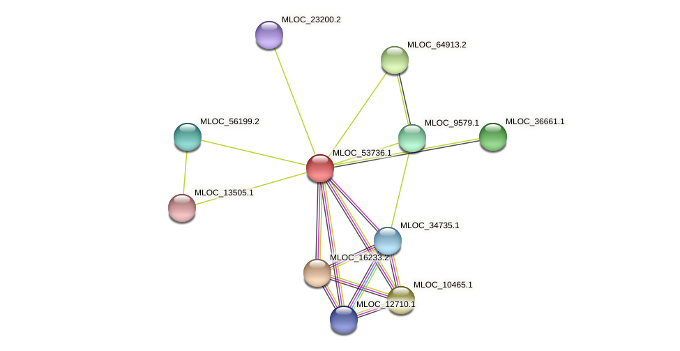 MLOC_53736.1 protein (Hordeum vulgare) - STRING interaction network