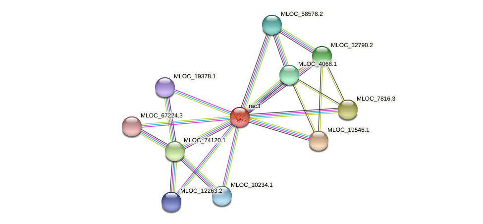 rac3 protein (Hordeum vulgare) - STRING interaction network