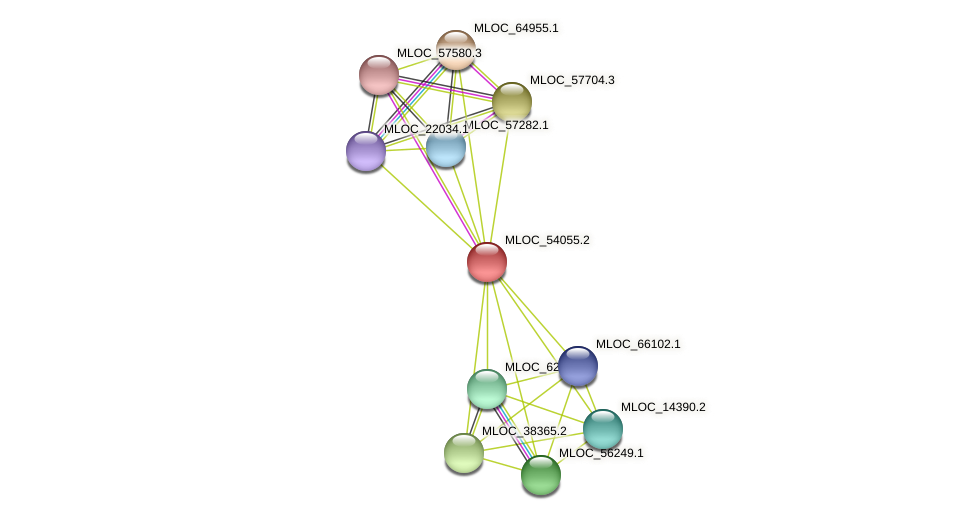 MLOC_54055.2 protein (Hordeum vulgare) - STRING interaction network