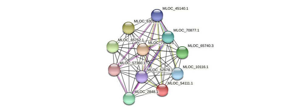 MLOC_54111.1 protein (Hordeum vulgare) - STRING interaction network