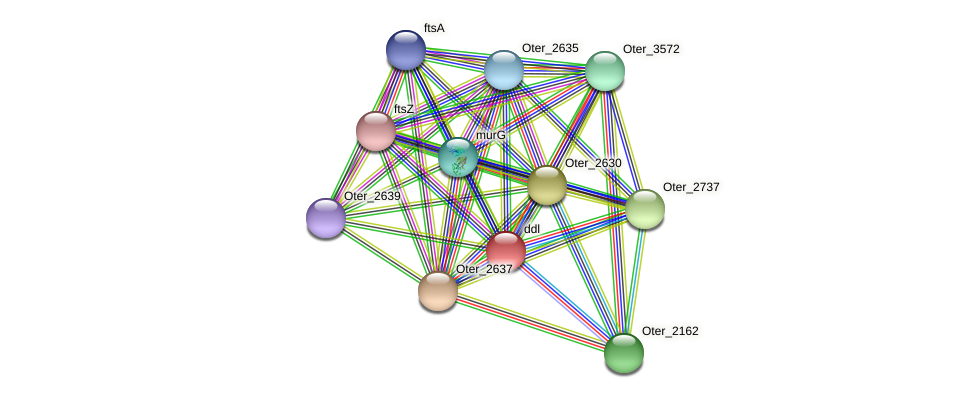 ddl protein (Opitutus terrae) - STRING interaction network