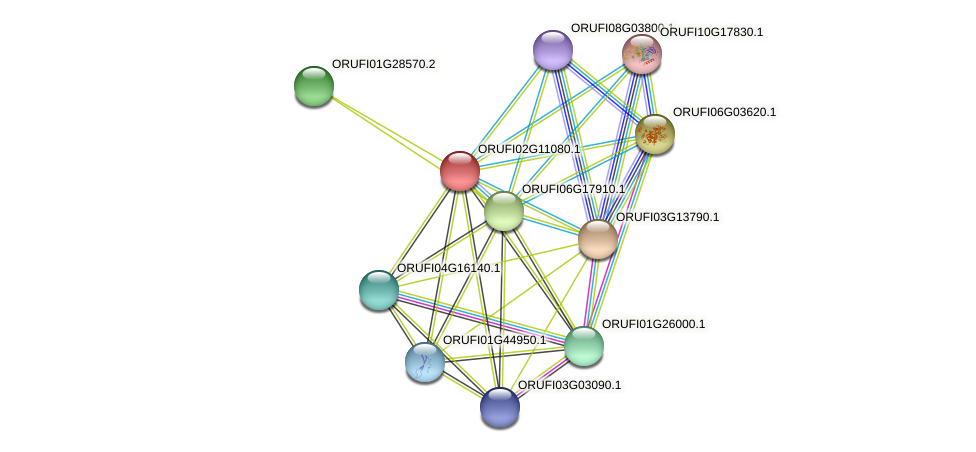 ORUFI02G11080.1 protein (Oryza rufipogon) - STRING interaction network